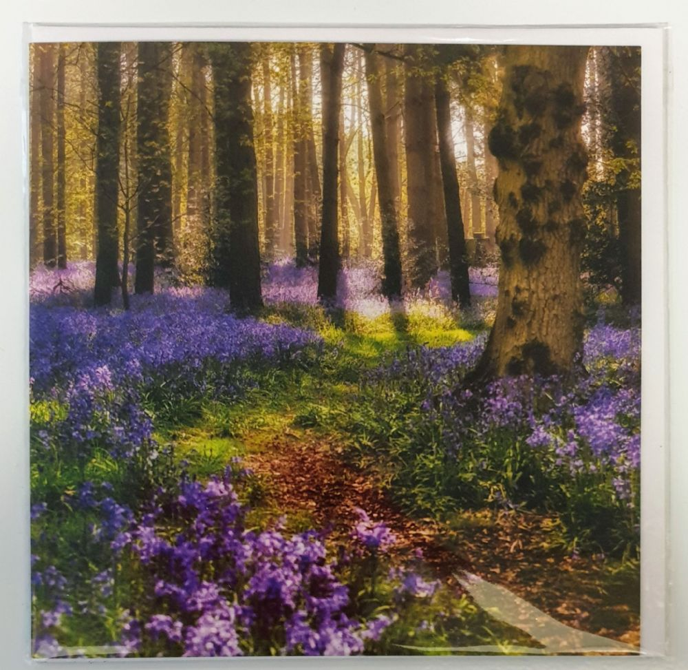Card - Bluebell Forest
